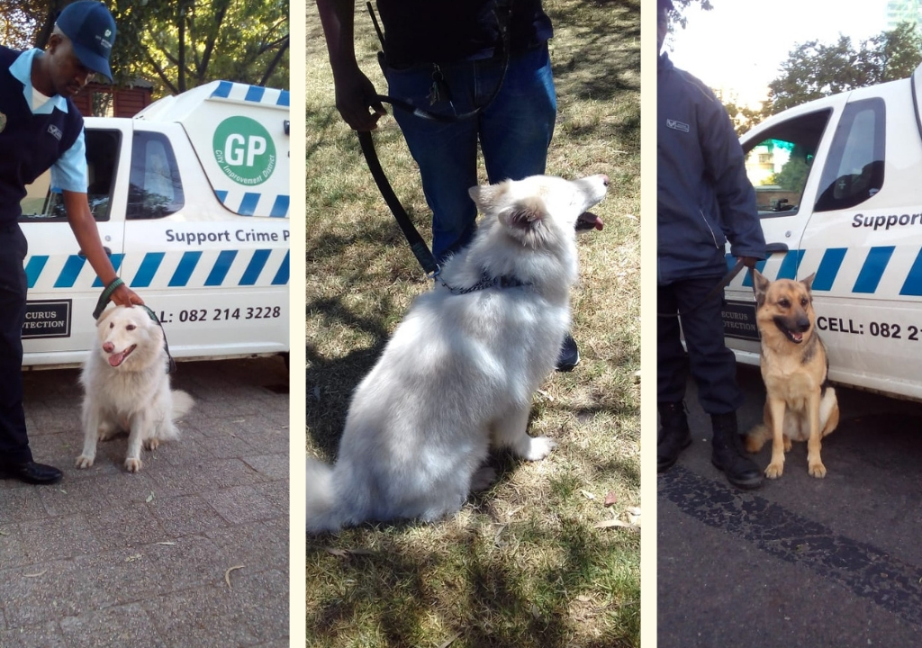 Meet the K9s who are keeping us safe