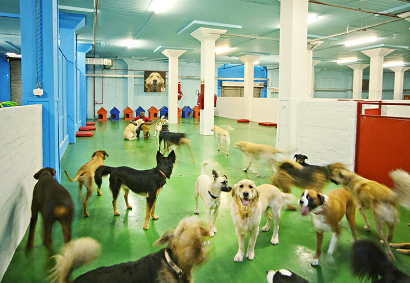 Local business feature: atFrits Dog Hotel